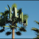 GSM Camouflage Antennenturm WiFi Monopole Tower Bionic Tower