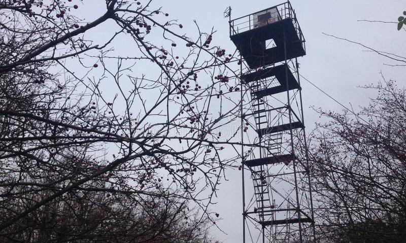 Lattice angular steel platform Mountain forest outlook fire observation watchtower